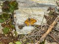 Wall Brown butterfly - Foncebadon Royalty Free Stock Photo