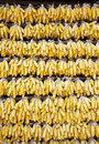 Wall of corn cobs hanging across a home to dry in yunnan province china Stock Images
