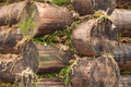 Wall corner of the wooden logs Stock Photography