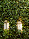 Wall covered in ivy on old building Royalty Free Stock Photography