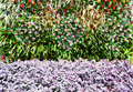 Wall flowers beautiful in the garden Royalty Free Stock Photography