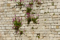 Wall with flowers Royalty Free Stock Photo