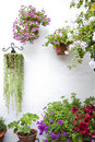 Wall with flowers pots Royalty Free Stock Photo