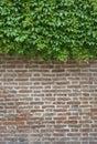 Wall green ivy and brown brick Stock Image