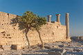 Wall of аncient пreek acropolis ancient greek near grow the tree Stock Photos