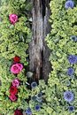 Flowers surrounded a piece of old wood Royalty Free Stock Photo