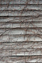 Wall plate of wood entangled with ivy this is a Royalty Free Stock Photos