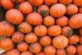 Wall Of Pumpkin