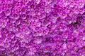 Wall Of Purple Flowers