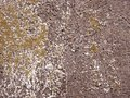 A wall texture brown cracked Royalty Free Stock Image
