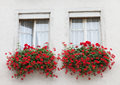 Wall with two windows decorated by flowerpots red flowers Royalty Free Stock Image