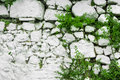 Wall of white stone with leaves and plants. Royalty Free Stock Photo