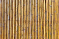 Wall of yellow bamboo log Royalty Free Stock Photography