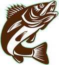 Walleye Fish Jumping Isolated Retro