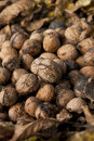 Wallnut pile Stock Photography