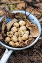 Wallnuts in collander