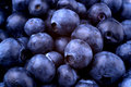 Wallpapaer of Blueberries Royalty Free Stock Photo