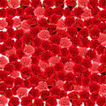 Wallpaper of red and pink roses Stock Image