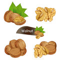 Walnut kernel in nutshell with leaves set Royalty Free Stock Photo