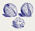 Walnut sketch Royalty Free Stock Images