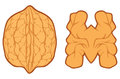 Walnut symbol illustration sign Stock Image