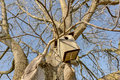 Walnut tree in winter Royalty Free Stock Photo