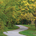 Walnut Trees In Autumnal Park, Large Detailed Vertical Landscaped Autumn Path Scene, Twisting Tarmac Walkway, Winding Asphalt Road Royalty Free Stock Photo