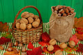 Walnuts and hazelnuts Royalty Free Stock Photos