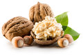 Walnuts and hazelnuts isolated on the white background Royalty Free Stock Photo