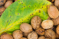 Walnuts and leaf. Stock Images