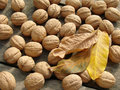 Walnuts with leaves Royalty Free Stock Photo