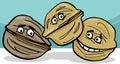Walnuts Nuts Cartoon Illustrat...