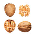 Walnuts set isolated Royalty Free Stock Photo