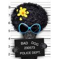 Wanted hippie dog mugshot of Royalty Free Stock Photography
