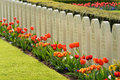 War cemetery graves of dutch soldiers at field of honour grebbeberg killed in the the battle of the grebbeberg in the second world Royalty Free Stock Photo