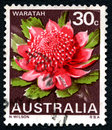 Waratah Australian Postage Royalty Free Stock Photo