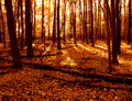 Warm Colors Woods And Fall Lea...