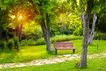 Warm evening in summer park Royalty Free Stock Photo