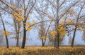 Warm fall morning fog in the park Royalty Free Stock Photo