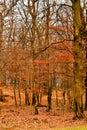 Warm red - orange landscape of autumn trees Royalty Free Stock Photo