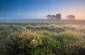 Warm summer sunrise over swamps fochteloerveen netherlands Royalty Free Stock Photos