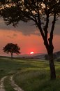 Warm sunlight at sunset with backlit trees in the hills of tuscany italy Royalty Free Stock Images