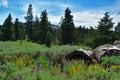 Warner Mountains, Modoc County, California
