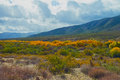 Warner springs fall color in the valley at california Royalty Free Stock Image