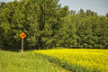 A warning sign of a dip in the road orange beside yellow field canola and tall trees Royalty Free Stock Photo