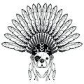Warrior style French bulldog with tribal Headdress with plain feathers in white and black symbolizing native American people Royalty Free Stock Photo