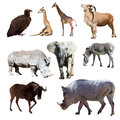 Warthog and few other african animals isolated over white Stock Photography