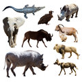 Warthog and other african animals isolated over white background Royalty Free Stock Images