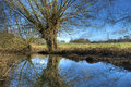 Warwickshire willow trees at great alne england Stock Images