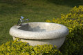 Washbasins stone among green leaves Royalty Free Stock Photo